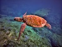 Oahu Diving