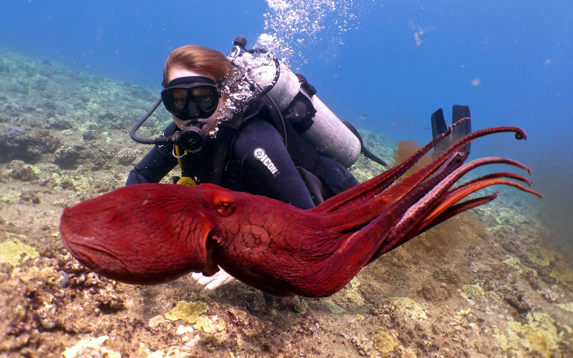 Oahu Scuba Shallow Reef Diving 3