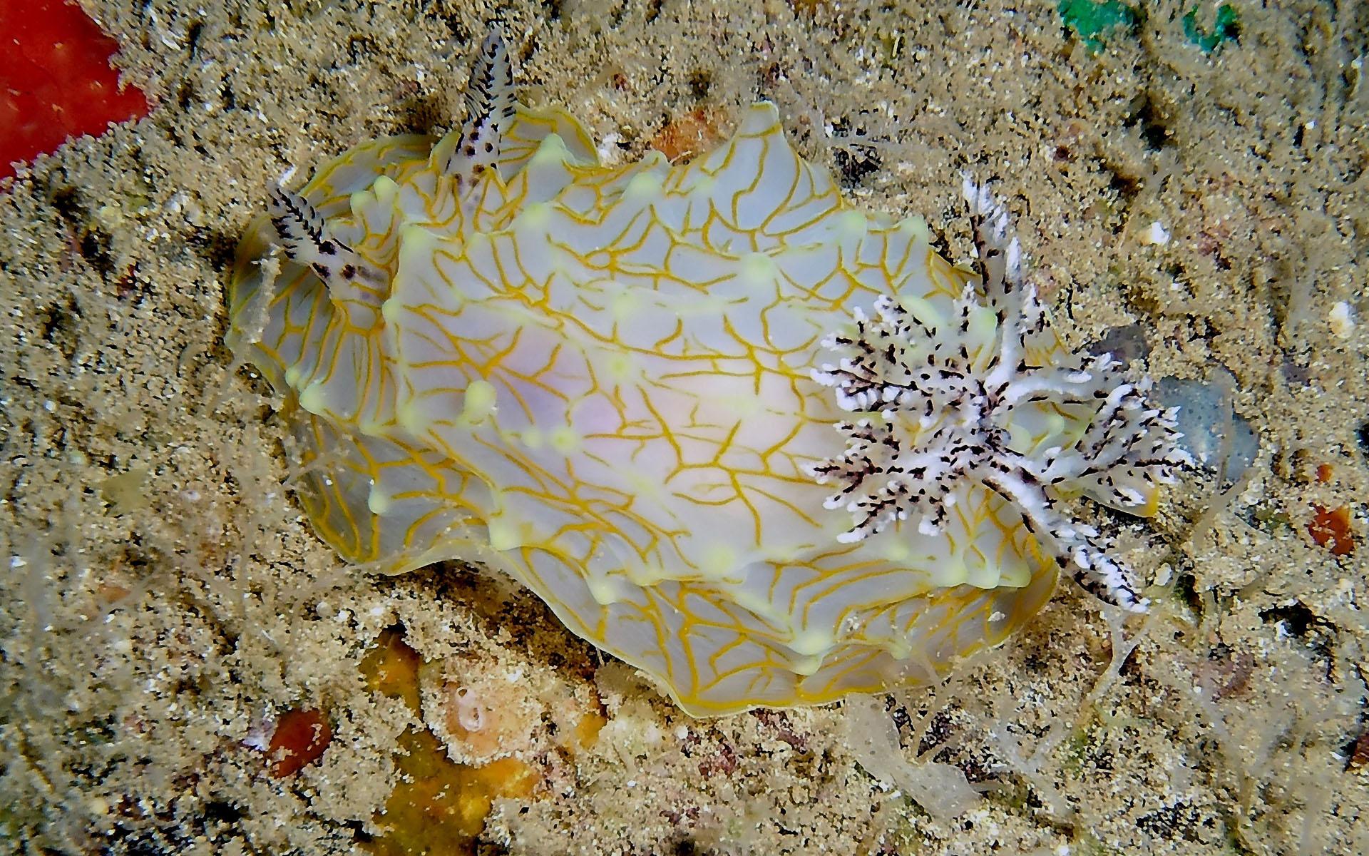 Oahu Scuba Shallow Reef Diving 5