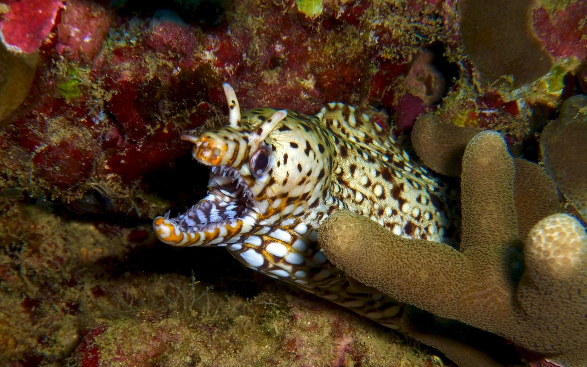 Oahu Scuba Shallow Reef Diving 8