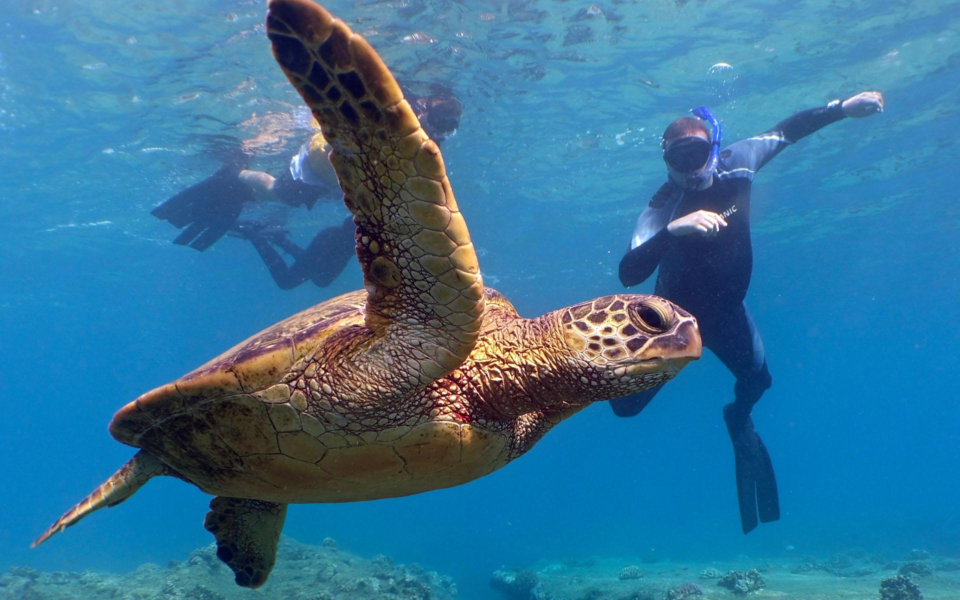 oahu hawaii snorkel tour 11