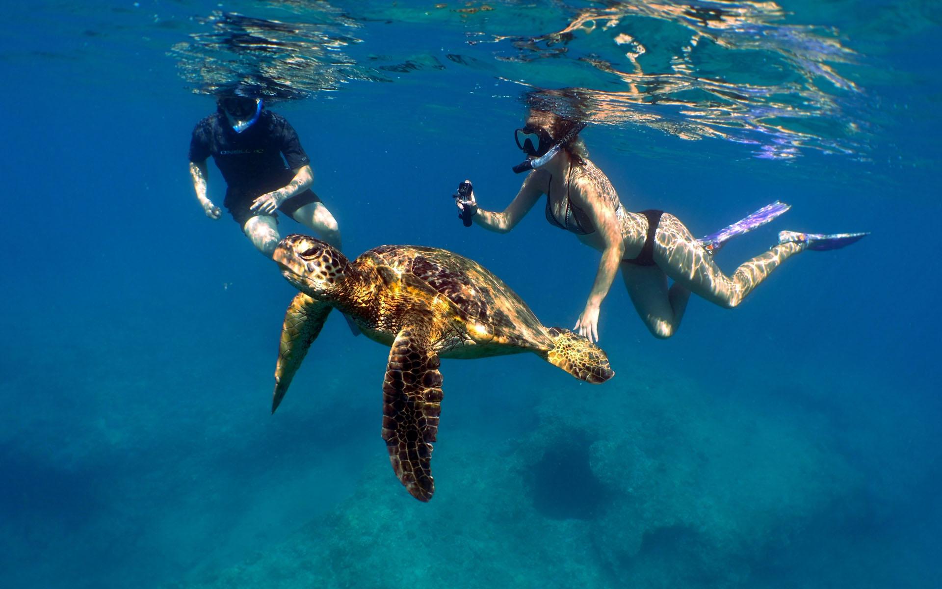 oahu hawaii snorkel tour 2