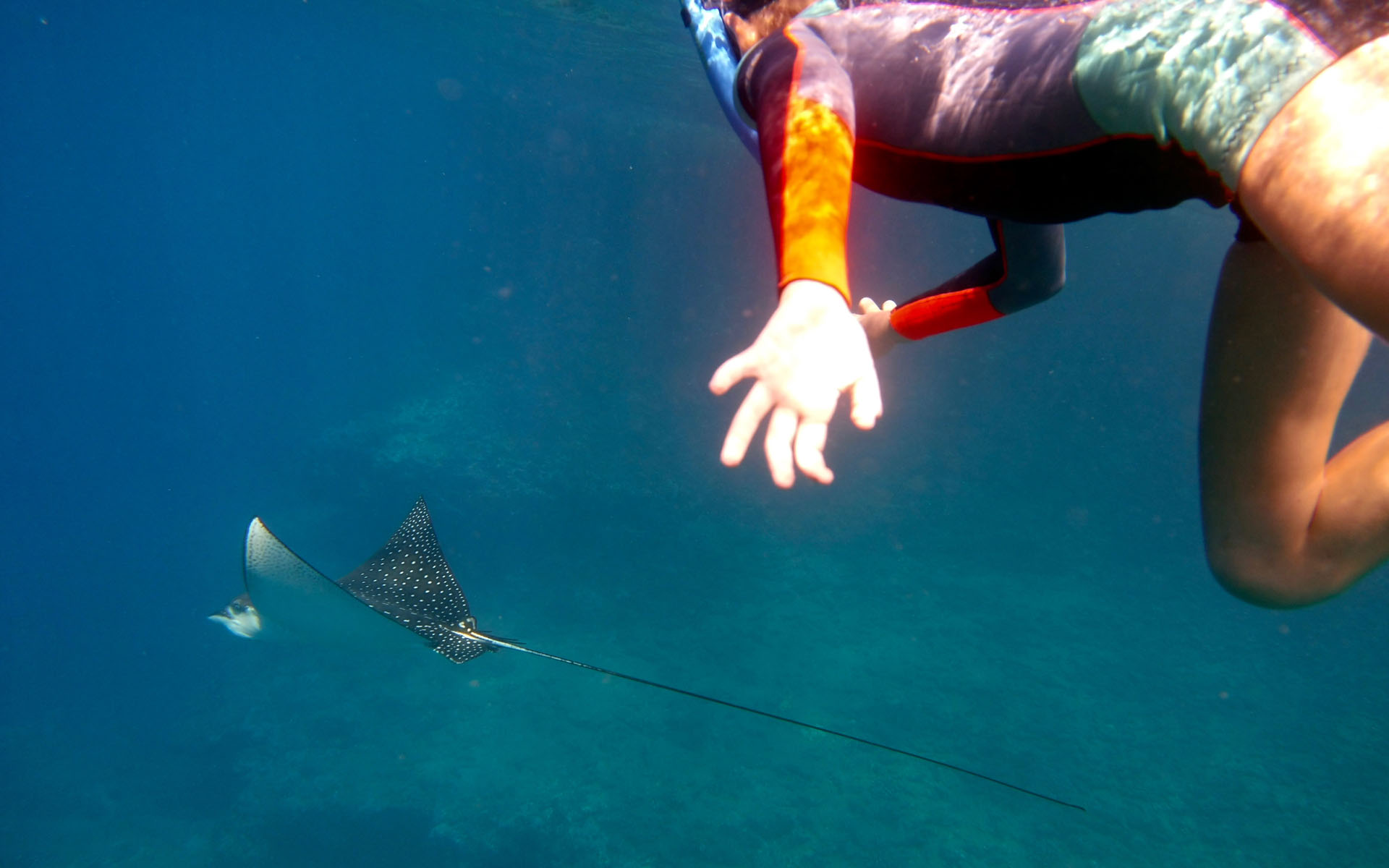 oahu hawaii snorkel tour 3