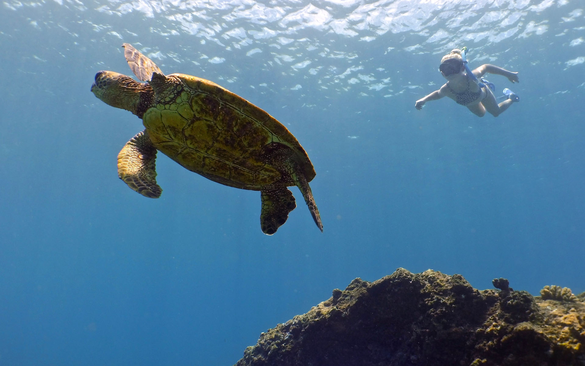 oahu hawaii snorkel tour 5